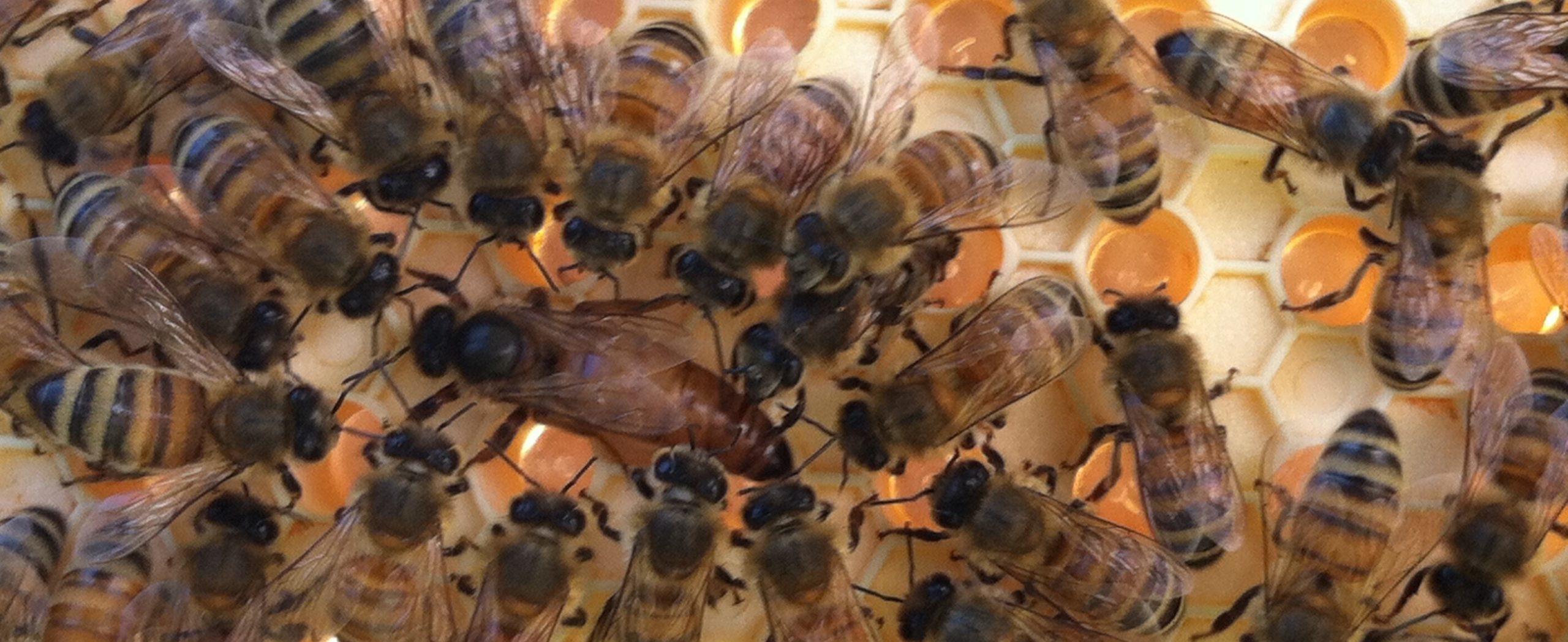Bee Circle Membership